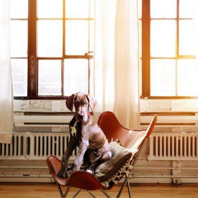 hond voor het raam